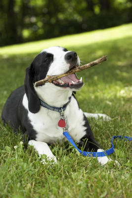 Dog with stick-w400-h400