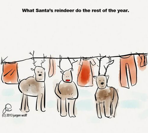Reindeer rest of year