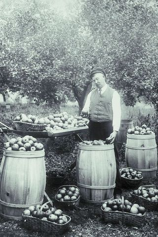 Old man with apples