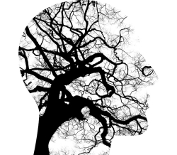 Photo trees within silhouette of head
