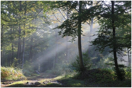 Photo forrest and suns-rays-1139123_640