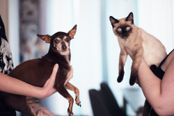 Photo dog and cat held by hands