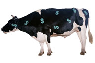 Cash_cow_small
